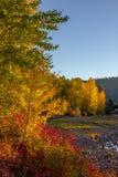 Cores vibrantes da queda ao longo do banco de rio fotos de stock