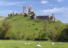 Corfe Castle with cows, Dorset Stock Photography