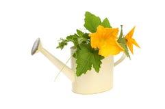 Corgette kwiat Fotografia Royalty Free