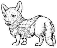 Corgi в одеждах иллюстрация вектора