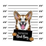 Corgi de Gallois criminel Photo d'arrestation Photo de photo Maintenez l'ordre la plaquette, photo de police, prisonnier de chien illustration stock
