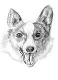Corgi do cão do esboço Ilustração Stock