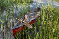 Corgi dog in a canoe Royalty Free Stock Photography
