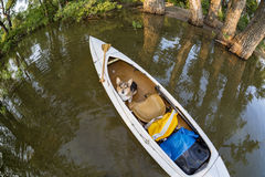 Corgi dog in canoe Stock Photo