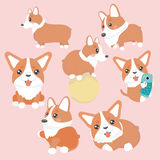 Corgi dog characters set. Stock Image