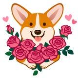 Corgi dog holding a bouquet of roses vector cartoon illustration. Funny cute humorous love, friendship, dating, romance, birthday royalty free illustration