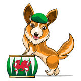 Corgi and Drum Royalty Free Stock Image