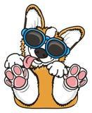 Corgi nos óculos de sol ilustração stock