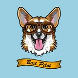 Corgi Pilot. Dog aviator. Welsh corgi portrait. Best pilot text. Vector. Illustration stock illustration