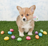 Easter Corgi Puppy Royalty Free Stock Images