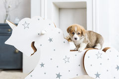 Corgi puppy leaning on a rocking horse in nursery room royalty free stock photo
