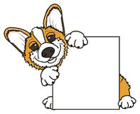 Corgi sticking out from behind a blank plate. Puppy Pembroke Welsh Corgi holds in paws an empty plate Royalty Free Stock Image