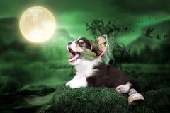 Corgi szczeniak w czarodziejskim lesie z czarodziejką fotografia stock