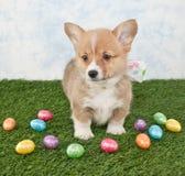 Wielkanocny Corgi szczeniak Obrazy Royalty Free