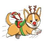 Corgi szczeniaka renifer Z Santa zabawką ono Uśmiecha się i Biega przy Pełną prędkością, Zdjęcia Royalty Free