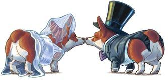 Corgibrud och brudgum Kissing Cartoon Illustration Royaltyfria Bilder