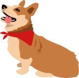 Corgihund Arkivfoto