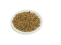Coriander. Seeds on a plate with a white background Royalty Free Stock Photos