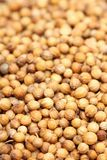 Coriander Royalty Free Stock Photography