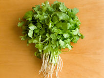 Coriander. Fresh green coriander on the wooden table. Up view Royalty Free Stock Photo