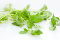 Coriander. Add a little parsley when cooking dishes taste even more beautiful Royalty Free Stock Photography