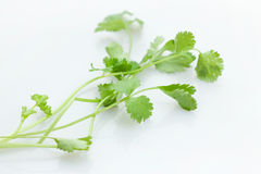 Coriander. Add a little parsley when cooking dishes taste even more beautiful Stock Photos