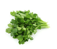 Free Coriander Royalty Free Stock Images - 13509129