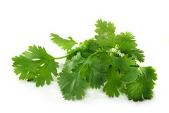 Coriander. Fresh coriander on a white background Royalty Free Stock Photos