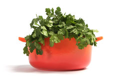 Coriander Stock Photos
