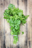 Coriander. Royalty Free Stock Photos