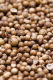 Coriander. Dry and natural coriander for adding flavor to different meals Stock Photography