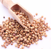 Coriander. Some asian, dried coriander seeds Royalty Free Stock Image