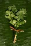 Coriander. On banana leaves Royalty Free Stock Photography