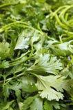Coriander. Close up of fresh green coriander leaves Royalty Free Stock Photos