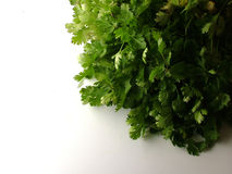 Coriander. Herb, Green, fresh, leaves Royalty Free Stock Images
