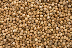 Coriander as whole background Royalty Free Stock Photo