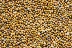 Coriander background. Backgound from grains of coriander Royalty Free Stock Photo