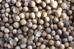 Coriander background (coriandrum sativum). Close-up of several seeds Stock Photo