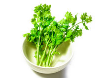 Coriander in bowl Stock Photo
