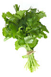 Coriander Bunch Royalty Free Stock Image