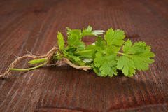 Coriander bunch. Culinary herbs Stock Photos
