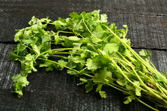 Coriander bunch, Stock Photography