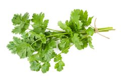 Coriander. Bunch isolated on white Stock Photography