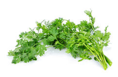 Coriander bunch. Isolated on white Stock Photography