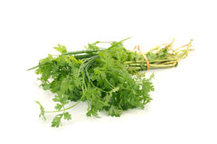Coriander bunch isolated on white.  Royalty Free Stock Photos