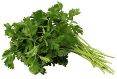 Coriander or Cilantro Royalty Free Stock Images