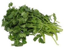 Coriander or Cilantro Royalty Free Stock Photography