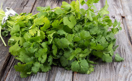 Coriander or cilantro bouquet. Fresh coriander or cilantro bouquet on old wood table royalty free stock image