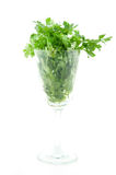 Coriander. Cilantro in glass on a white background. AKA chinese parsley, coriander and dhania Royalty Free Stock Photography