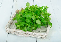 Coriander. Or cilantro grass on the wicker tray Royalty Free Stock Images